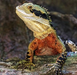 exotic pets stores 270